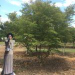 Laceleaf Japanese Maple